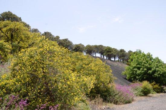 Valleseco, España: Montanon Negro