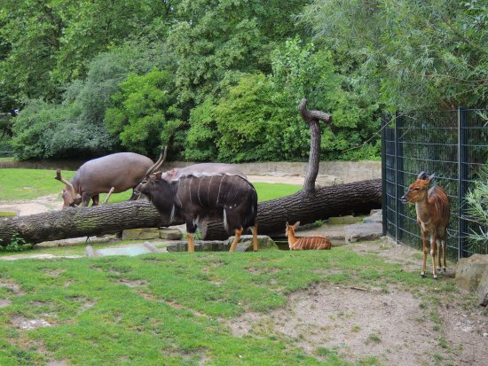 animals at zoo picture of berlin zoological garden berlin tripadvisor. Black Bedroom Furniture Sets. Home Design Ideas