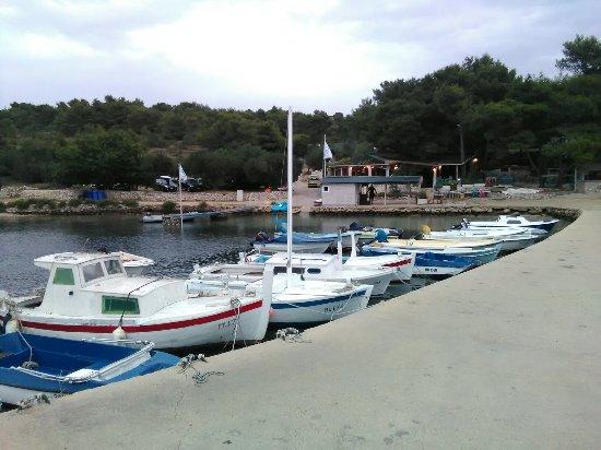 Dugi Otok/Murter, Chorwacja: Lantana