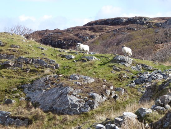 Glenuig, UK: Just us and the sheep