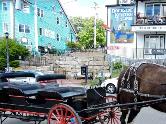Lunenburg, كندا: Elmo the horse from Trot in time carriage rides.