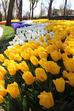 Emirgan Park: Фестиваль тюльпанов парк Эмирган