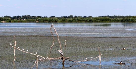 Poroszlo, Ungarn: Wasservogel-Paradies