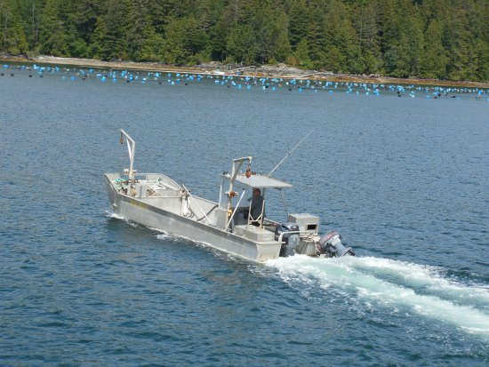 Lady Rose Marine Services: A fishing boat