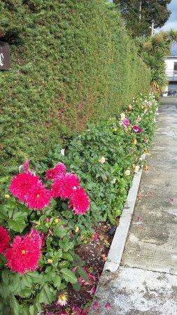 Shakespeare House: fleurs le log de l'allée