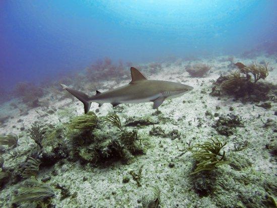 bahía de Simpson, St. Maarten: photo7.jpg
