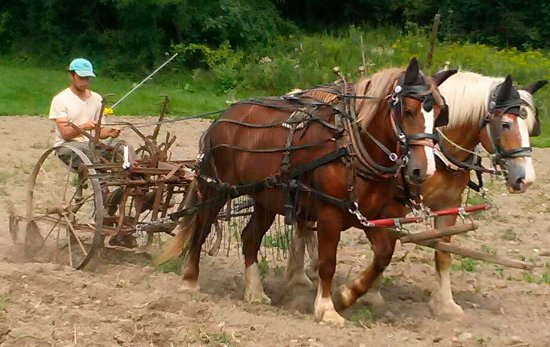 New Lebanon, NY: Plowing with horses in the 21st century has ecological benefits. Evan Thaler-Null at the Abode C
