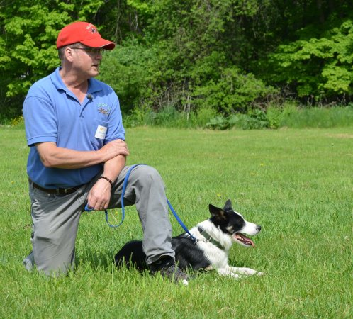 New Lebanon, NY: Eric Johnson trains border collies to herd sheep (and keep geese away from pools and golf course