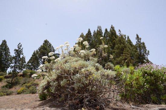 Galdar, Spain: Roślinność porastająca okolice punktu widokowego