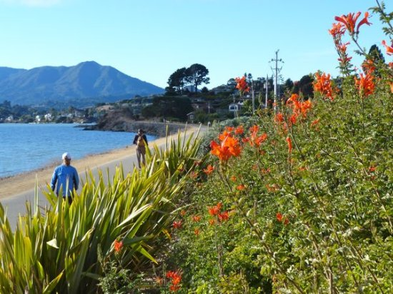 Larkspur, Californien: Walking tours by the bay!