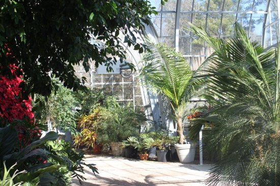 Inside one of the greenhouses - Picture of Birmingham Botanical ...