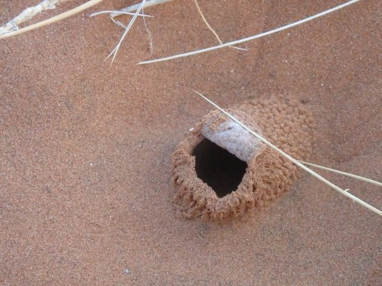House of the white lady spider - Picture of Namib Dune Star Camp ...