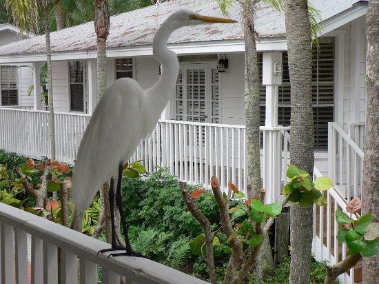 Little Gull Cottages: resident egret taking in the scenery
