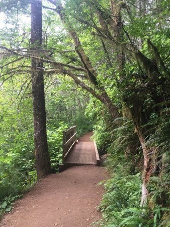 Oregon Coast, OR: Long, twisty road to the path. Restrooms available. Easy path to walk. Very dog friendly. Rememb