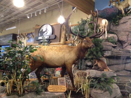 Springfield, Oregon: Cabelas - Roosevelt Elk - world's record for antler size