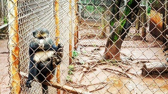 Nairobi Education Centre - Animal Orphanage: IMG_20160623_105027_large.jpg