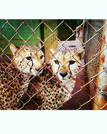 Nairobi Education Centre - Animal Orphanage: IMG_20160623_095301_large.jpg