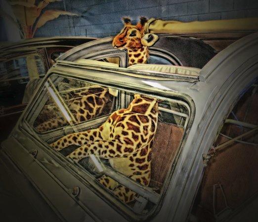 Pinellas Park, FL: Passenger in an old car