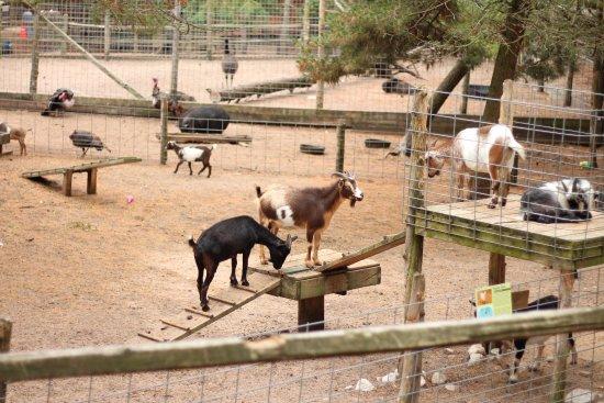Naubinway, MI: Goats! You can buy food to feed them.