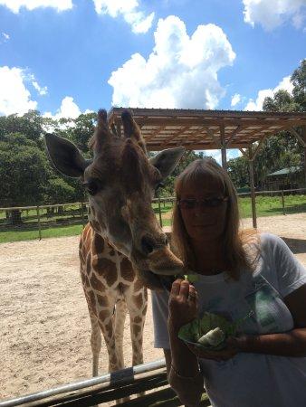 Giraffe Ranch: photo6.jpg