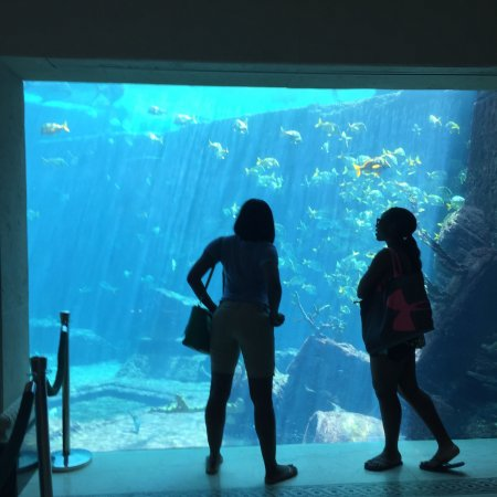 Marine Habitat at Atlantis: photo0.jpg