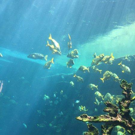 Marine Habitat at Atlantis: photo1.jpg