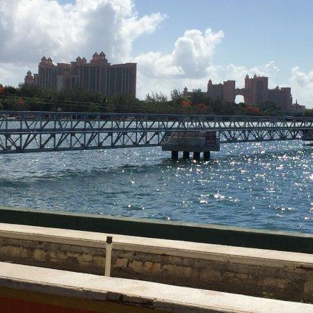 Marine Habitat at Atlantis: photo2.jpg