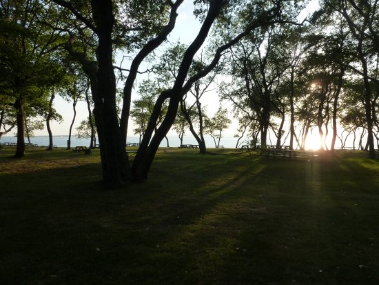 Colt State Park: Trees in the picnic area give some lovely shade