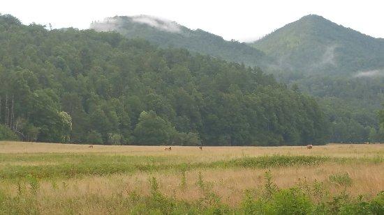 Great Smoky Mountains National Park, Caroline du Nord : 20160715_192325_large.jpg
