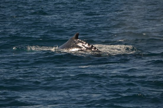 Nelson Bay, Australien: photo1.jpg