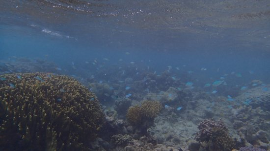 Tavanipupu Island Resort Foto