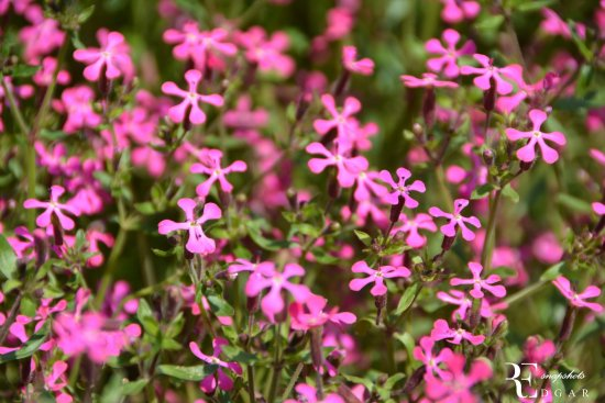 Jawaharlal Nehru Memorial Botanical Gardens: Flowers In The Garden