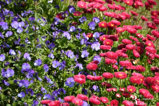 High Quality Jawaharlal Nehru Memorial Botanical Gardens: Flowers In The Garden