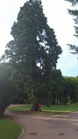 Parc de la Pépinière : 20160713_183736_large.jpg