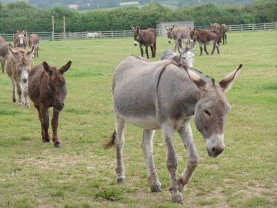 ‪The Donkey Sanctuary‬