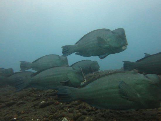 Tulamben, Indonesien: early morning dive at usat liberty wreck