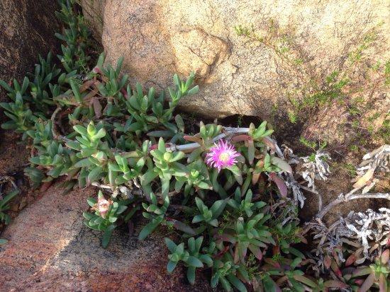 يالينجاب, أستراليا: photo4.jpg