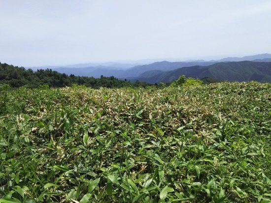 Mt. Jippo