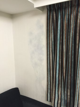 Hotel LBP: Moldy wall in main room