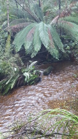 Strahan, Αυστραλία: Botanical Creek