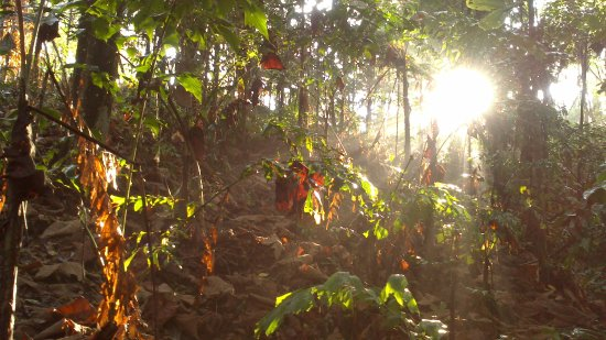 Klang, Malaysia: Seeing the sun through the trees