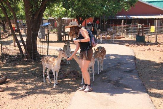 Williams, AZ: Grand Canyon deer farm