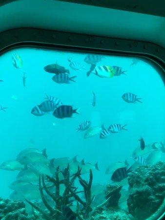 フィッシュアイマリンパーク海中展望塔, photo2.jpg