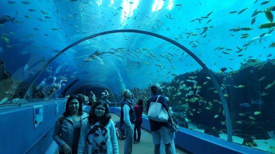 Túnel de vidro do Georgia Aquarium