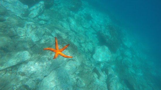Zafferana Etnea, Ιταλία: snorkeling catania lachea
