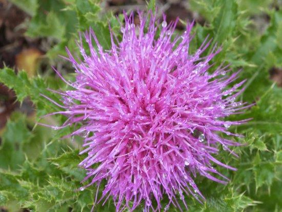 Manitoulin Island, Kanada: one of the pretty flowers