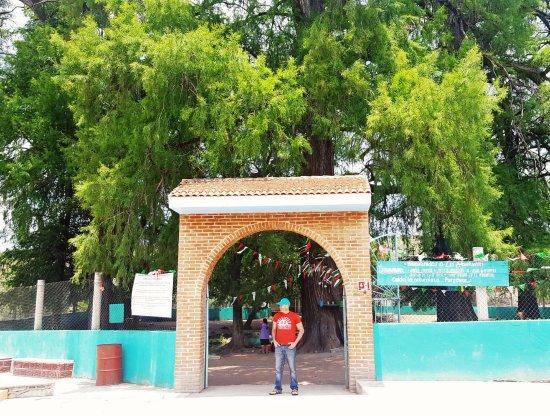 Puebla, Mexique : The entrance of los ahuehuetes