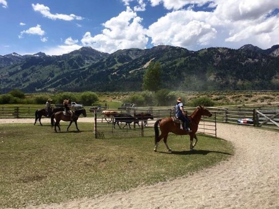 R Lazy S Ranch: Our Wranglers and our team penning