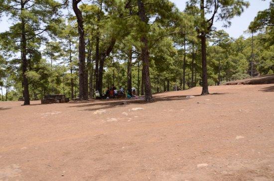 Pinar de Tamadaba : Piknik w Parku Tamadaba