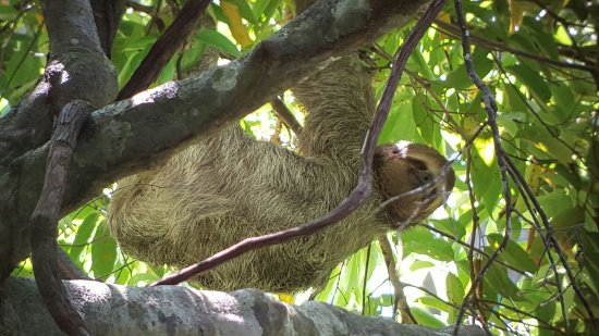 La Posada Private Jungle Bungalows: In the Jungle, we will waiting for you
